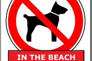 In the beach - Not dogs